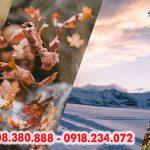Tận hưởng khoảnh khắc giao mùa với ưu đãi hấp dẫn từ Singapore Airlines