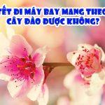 Tết đi máy bay có đem theo cây hoa đào được không?